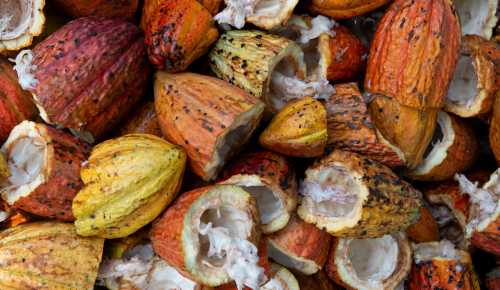 Is Cocoa Butter Good for Baby Skin