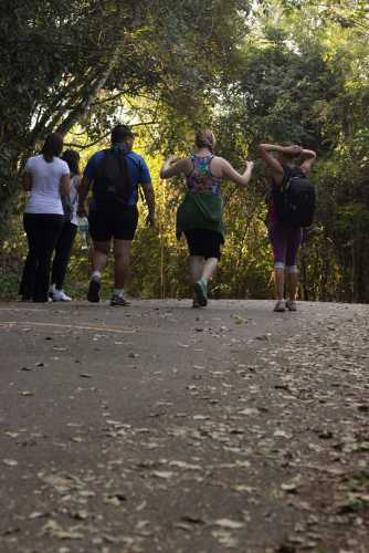 group of four people walking on a path